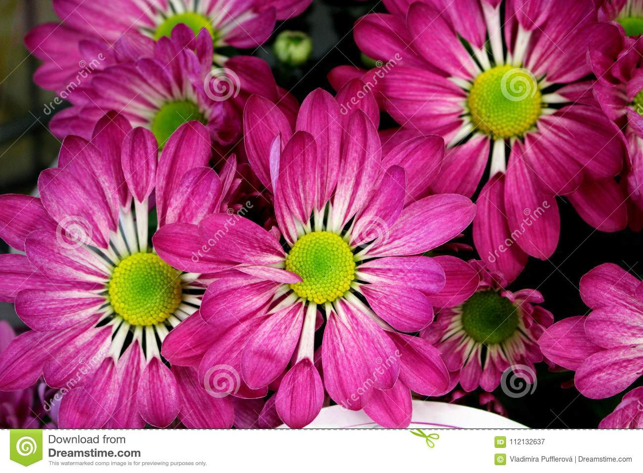 Beautiful Pink Spring Flower In A Flower Pot Ornamental Plants