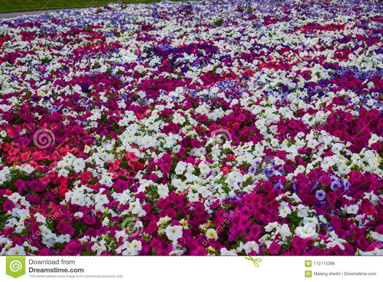 Beauty Full Flowers Close Look Stock Photo Image Of Beauty Green