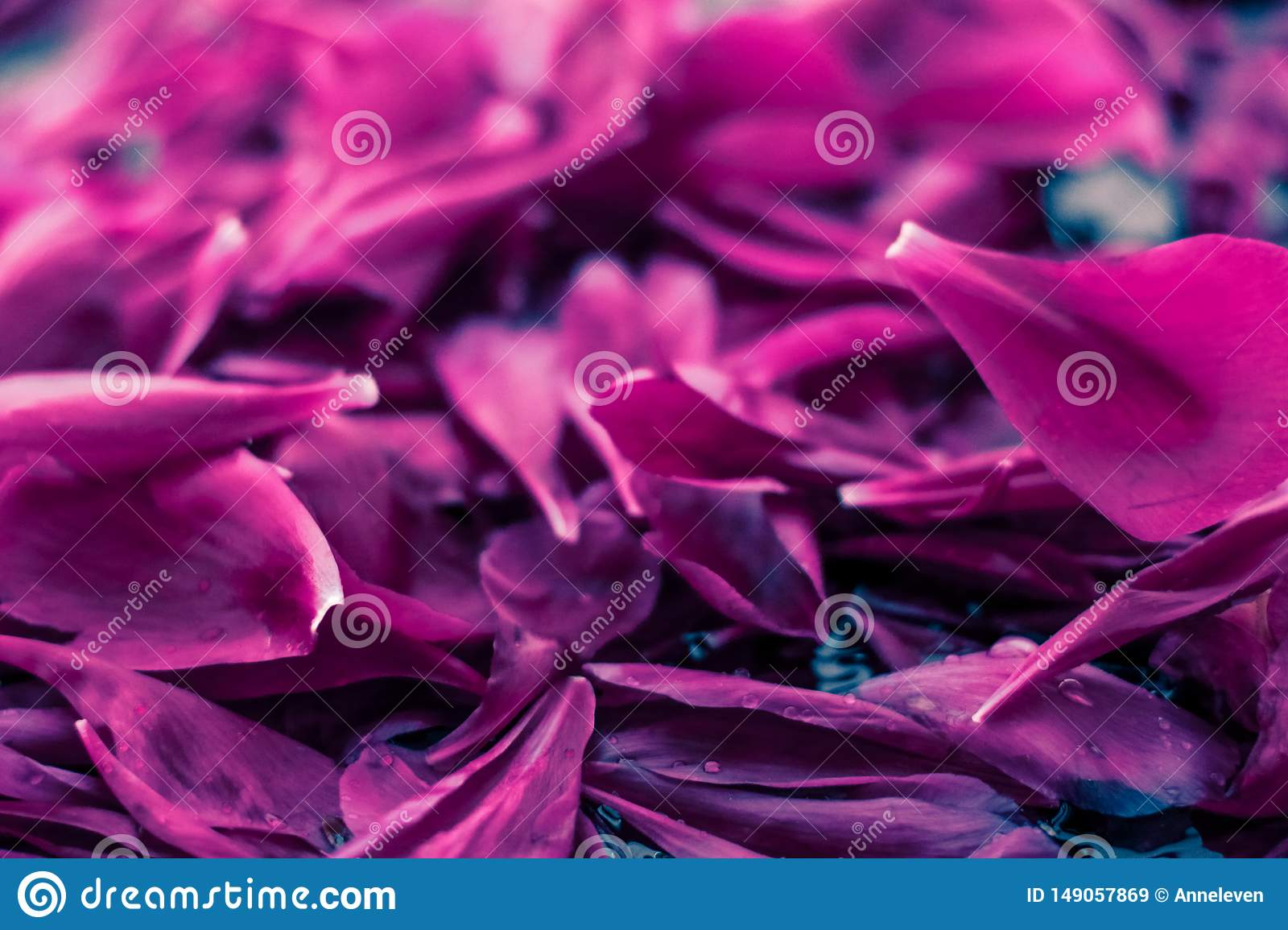 Abstract floral background, purple flower petals in water