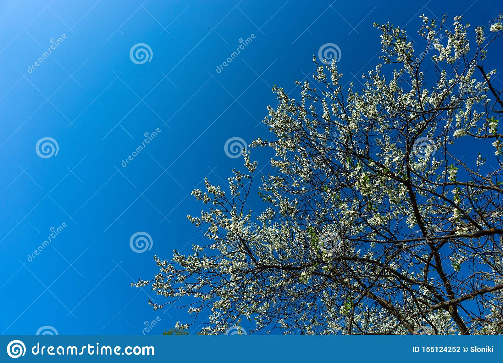 Beauty Of Nature Floral Desktop Background Blooming Closeup Tree