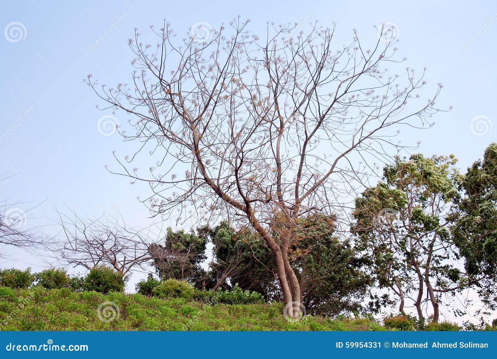 Beauty Of Nature Stock Photo Image 59954331