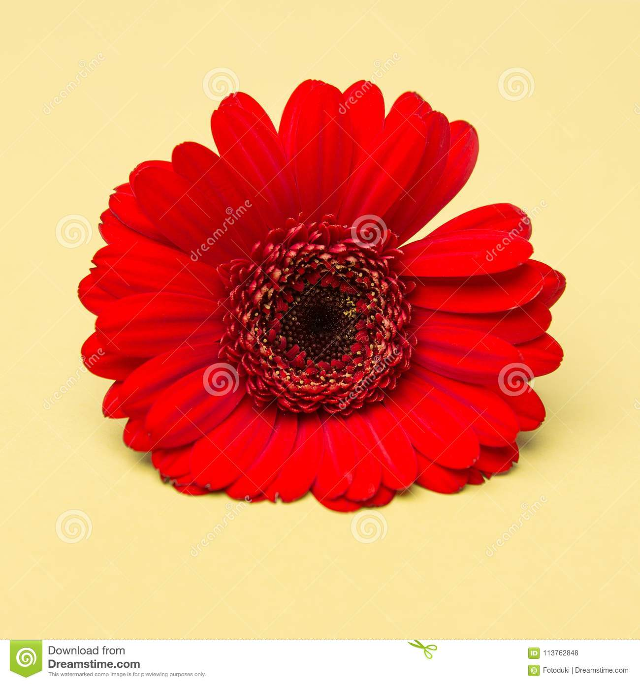 Beauty Red Flower On Yellow Background Stock Photo Image Of Yellow
