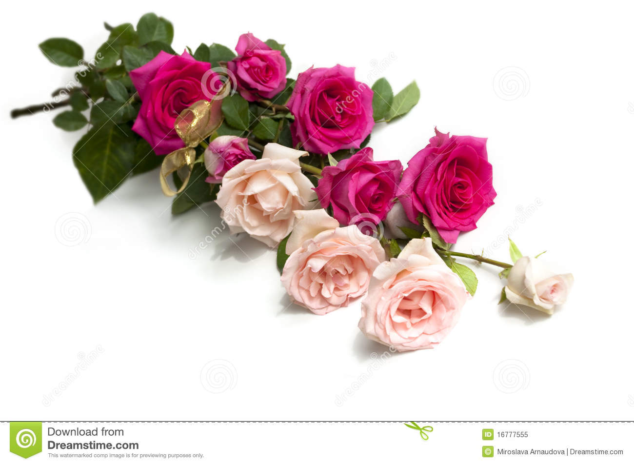 Beauty roses stock image image of flower natural background download beauty roses stock image image of flower natural background 16777555 izmirmasajfo