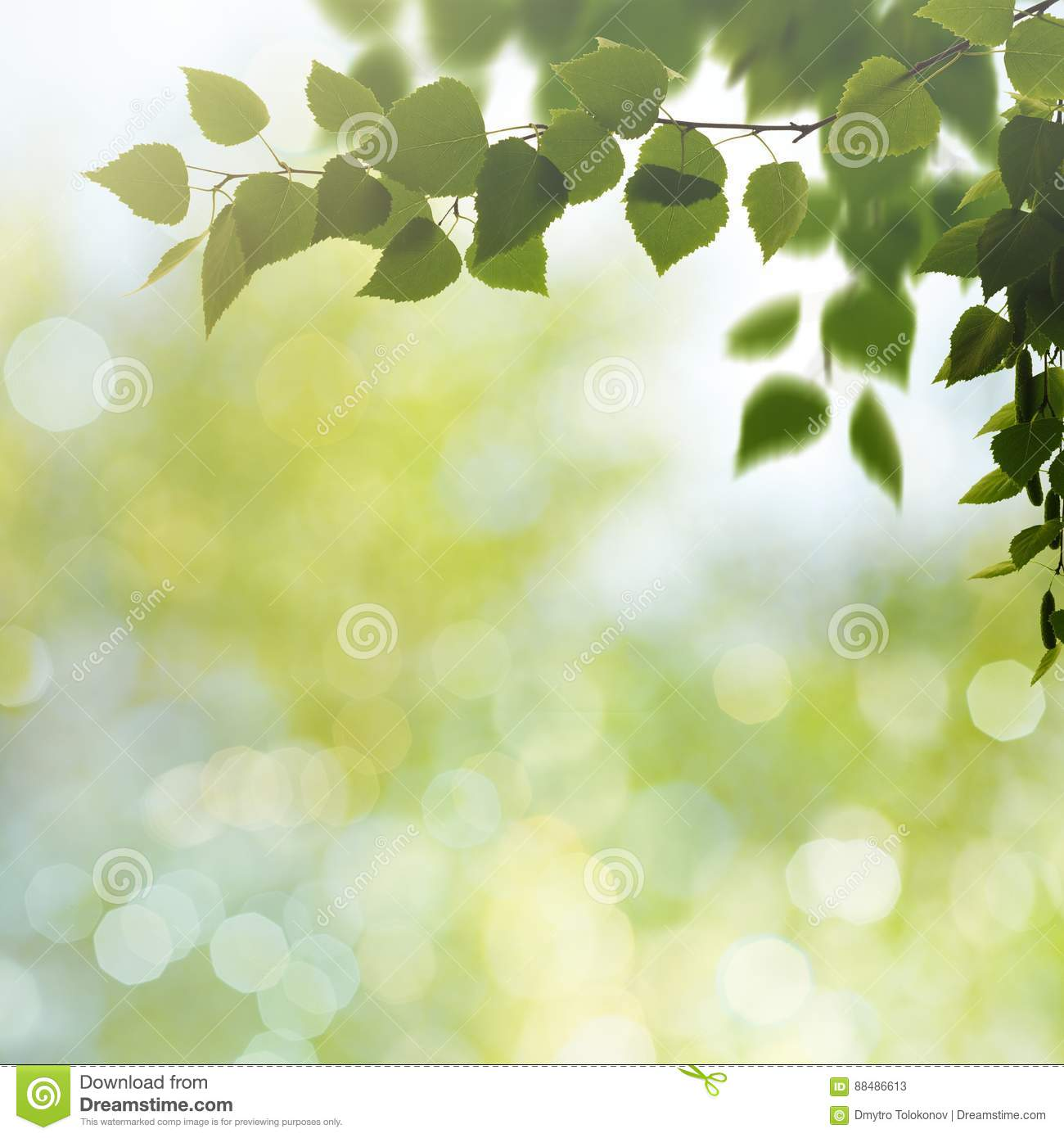 beauty spring and summer backgrounds stock image image of morning