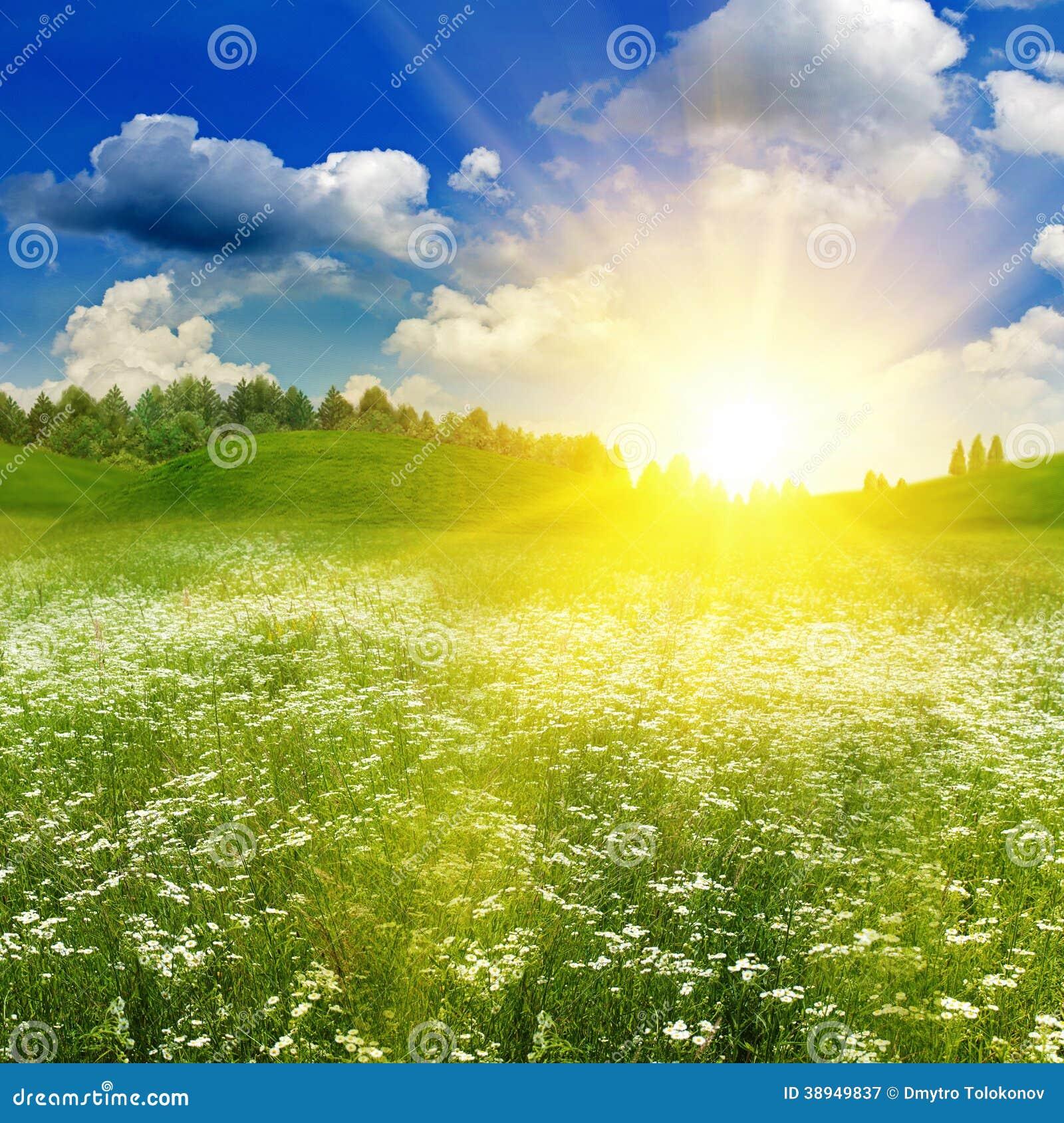 beauty summer field under bright evening sun stock image