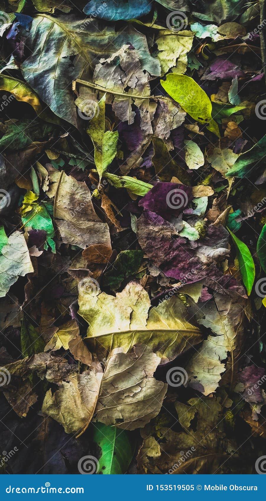 Beauty In Waste