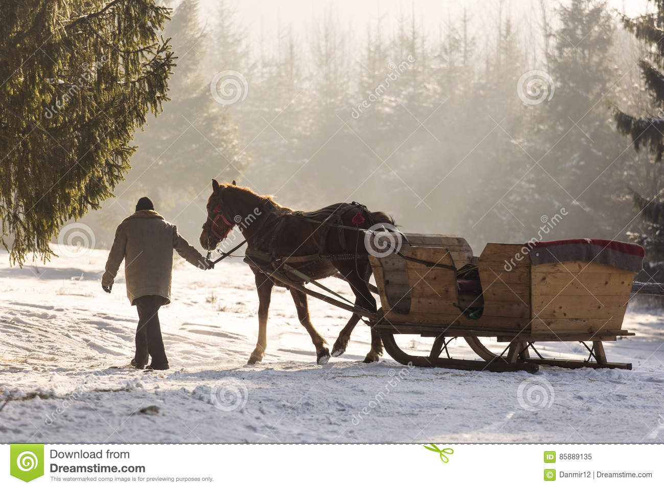 Beautyful sleigh in the winter trough the forest.