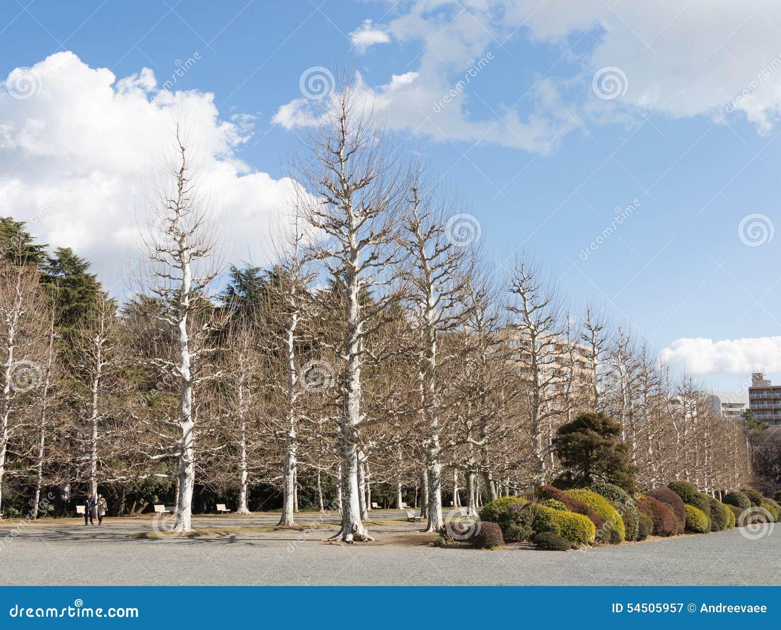 Beaux arbres nus en parc