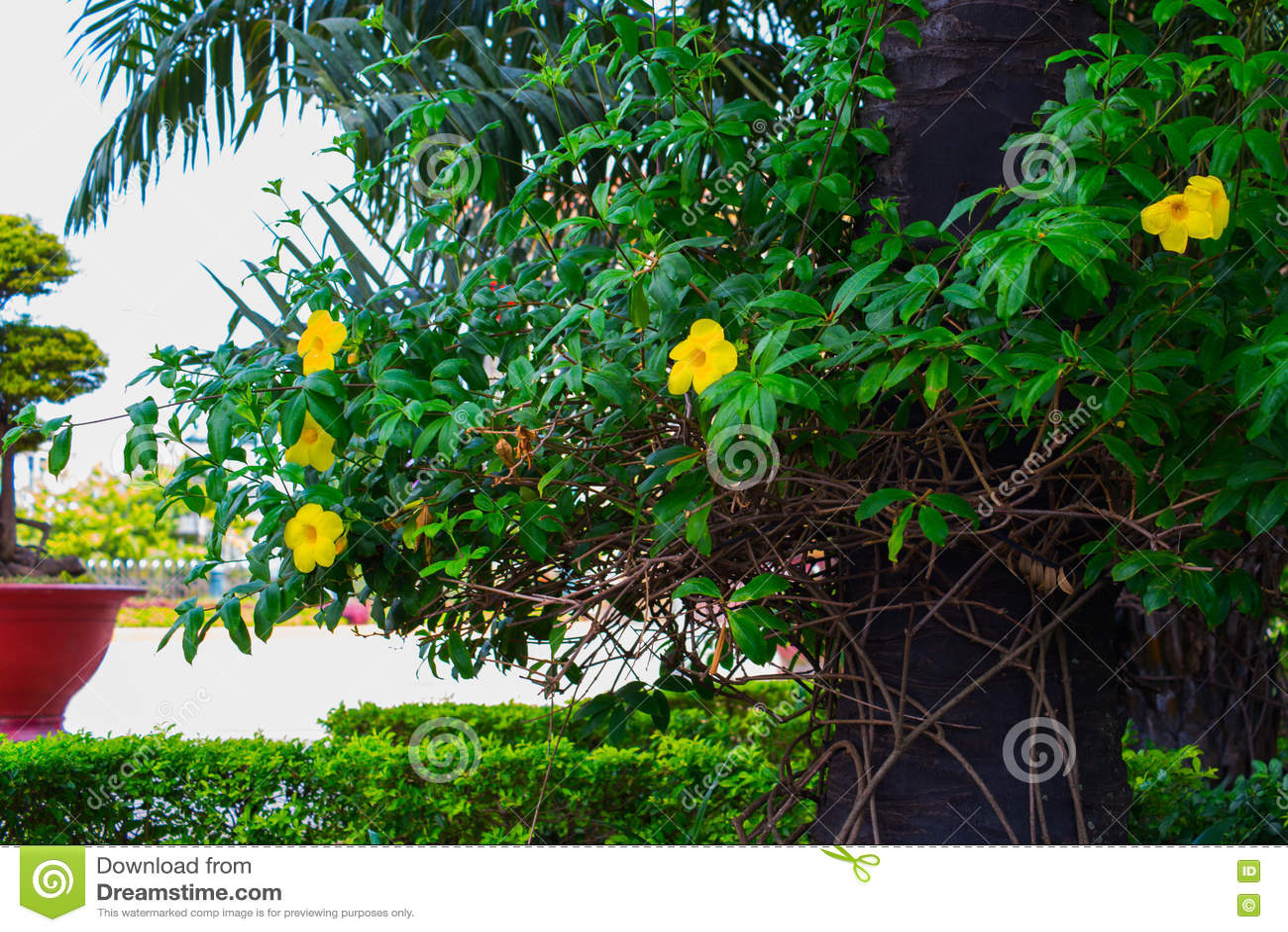 Beaux Arbustes Avec Les Fleurs Jaunes Et Arbres Avec Les Feuilles