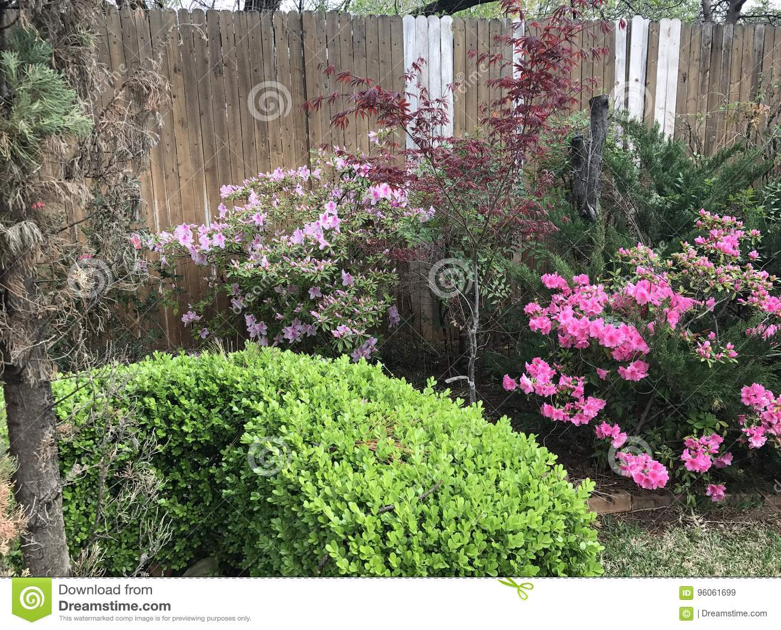 Beaux buissons roses de fleur