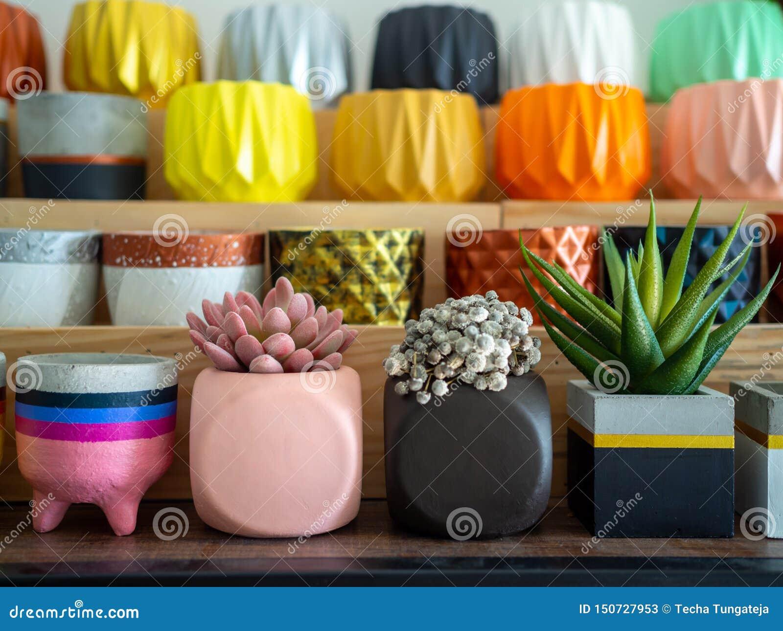 Beaux divers planteurs concrets géométriques avec le cactus, la fleur et la plante succulente Beaucoup de pots concrets peints co