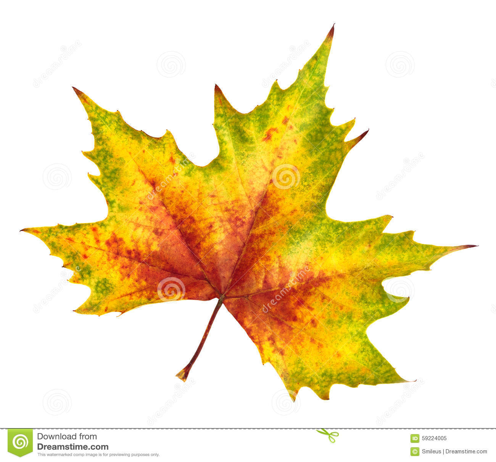 Beaux feuille d 39 automne riches en couleurs et le d tail - Image feuille automne ...