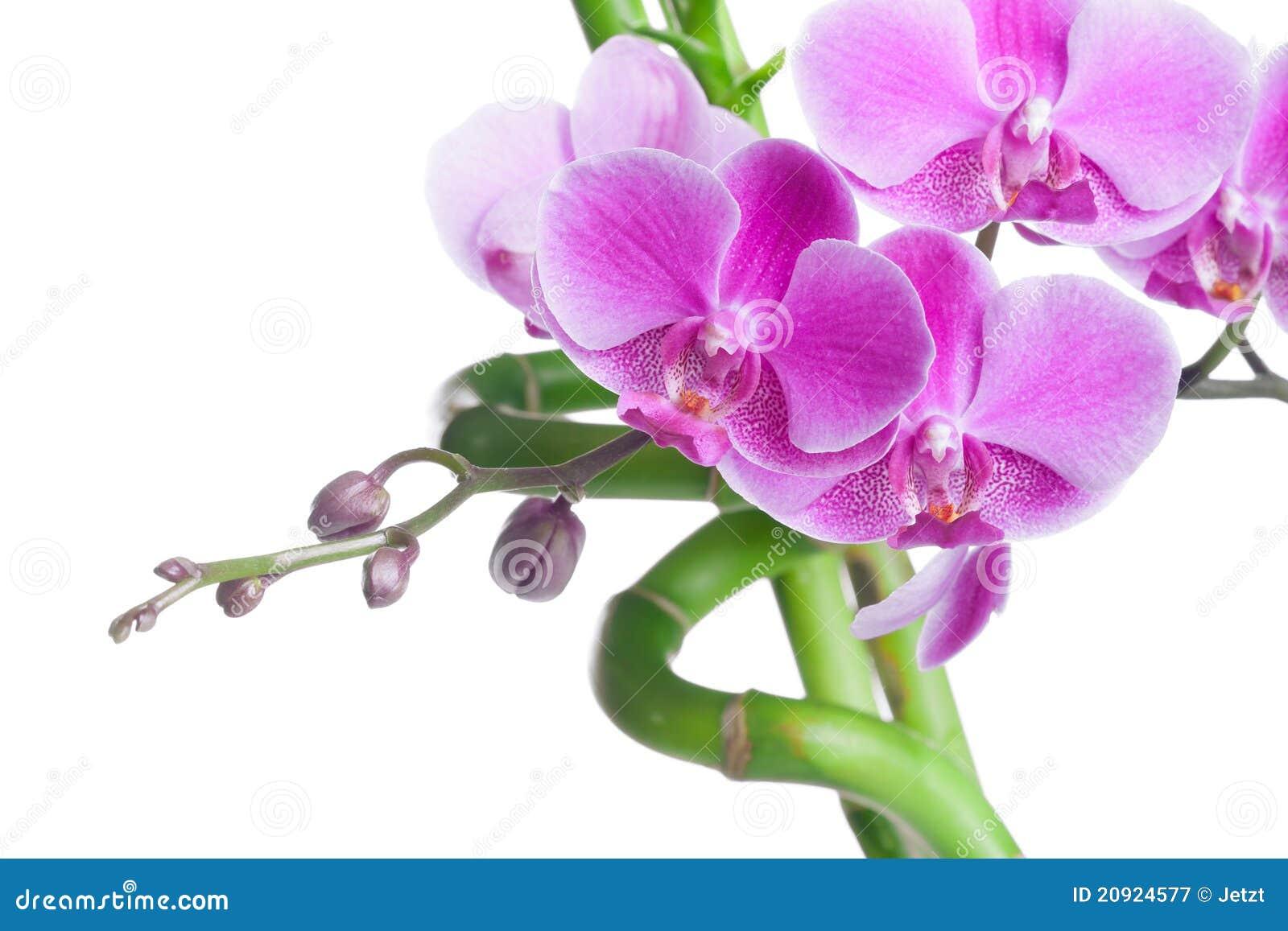 Fleur Bambou Arbuste Fleur Violette Gite Pompadour Lubersac