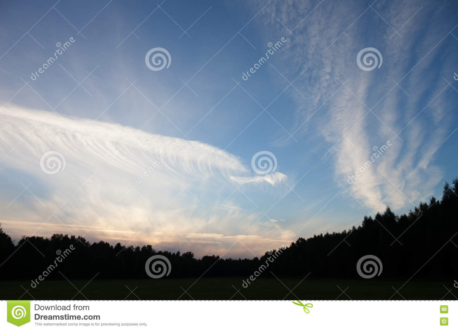 Beaux nuages blancs au-dessus de la forêt et du champ