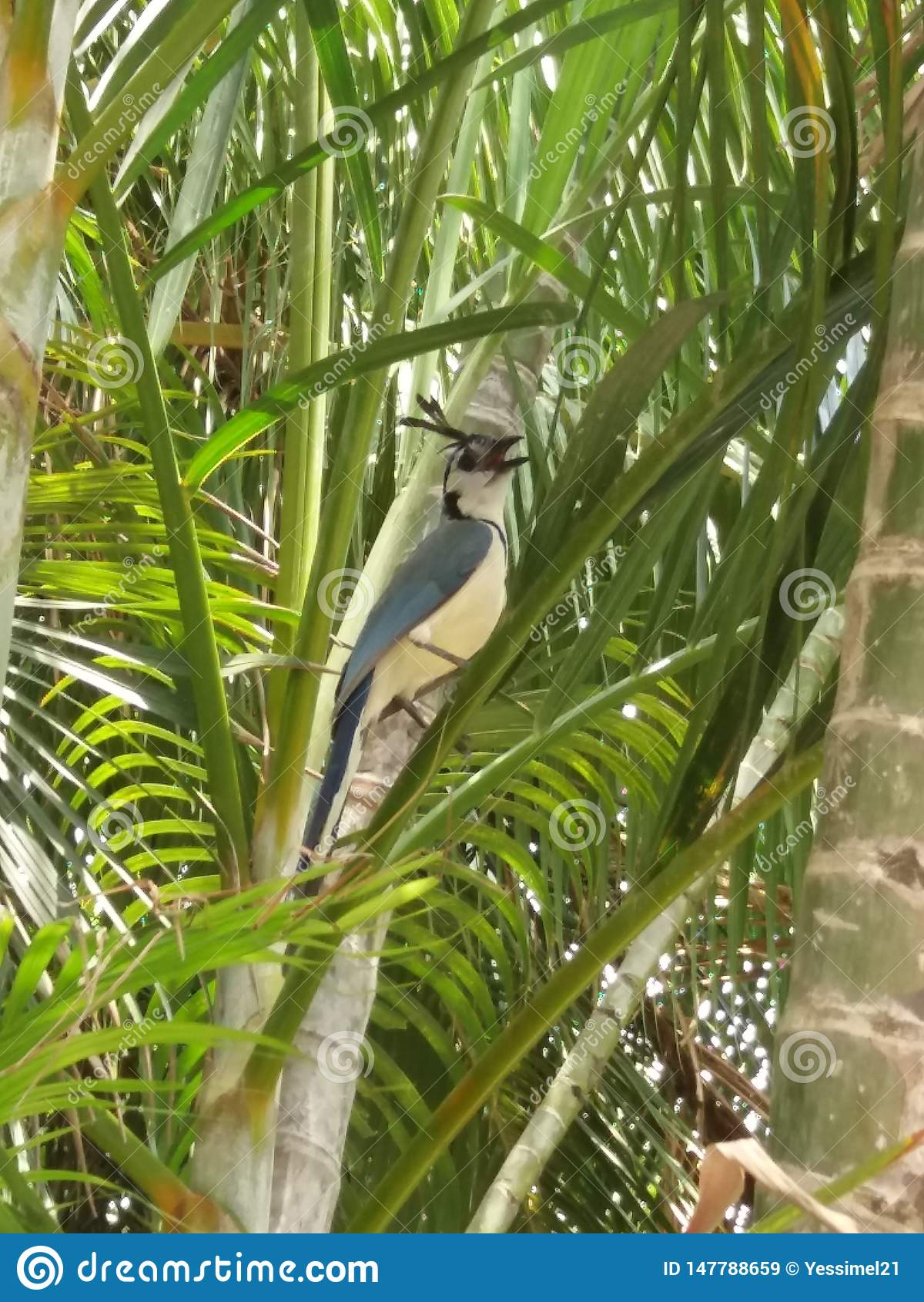 Beaux objets exotiques de cacatoès d oiseau