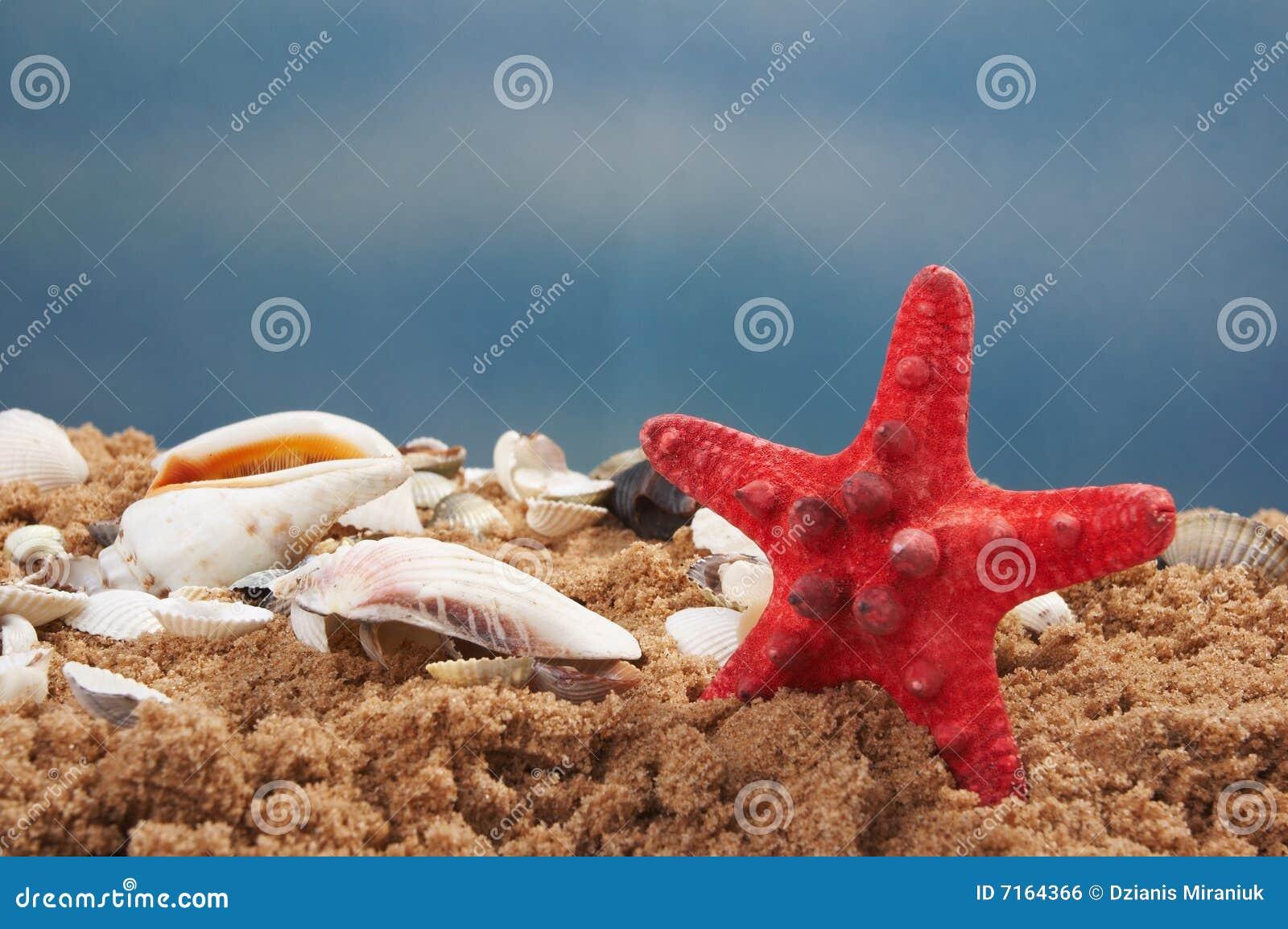 Beaux seashells contre