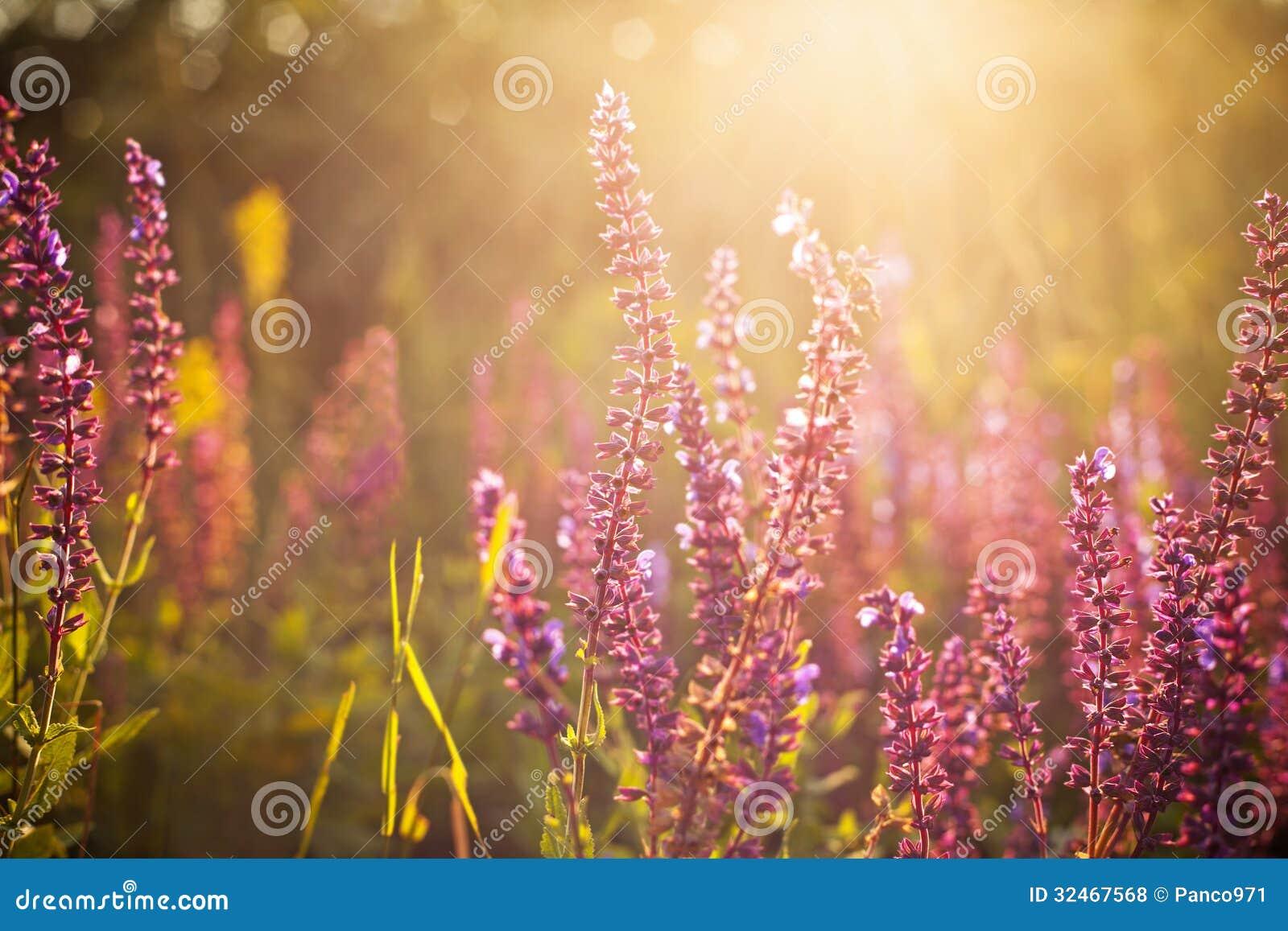 Beaux wildflowers de ressort