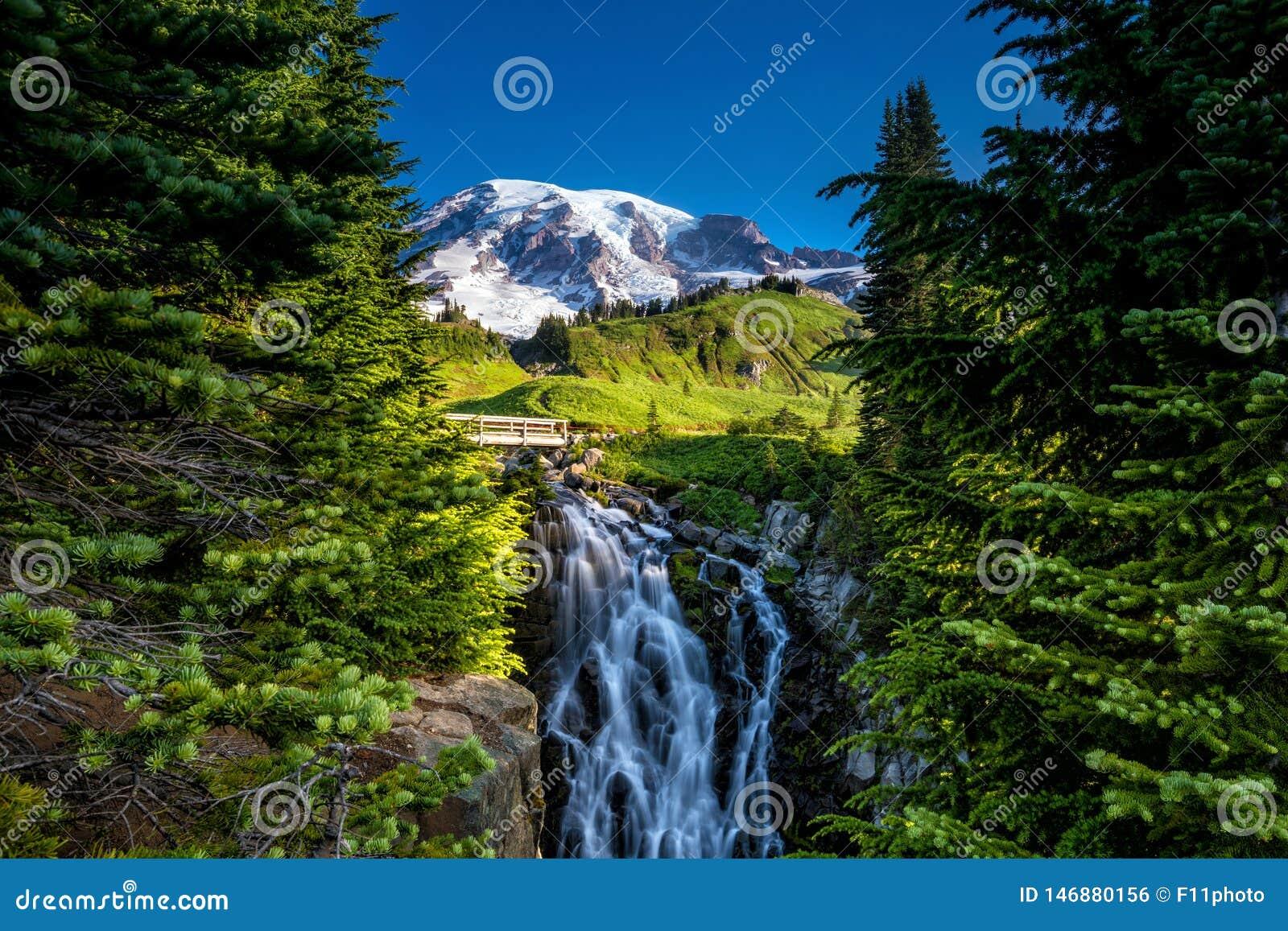 Beaux wildflowers et mont Rainier, l état de Washington