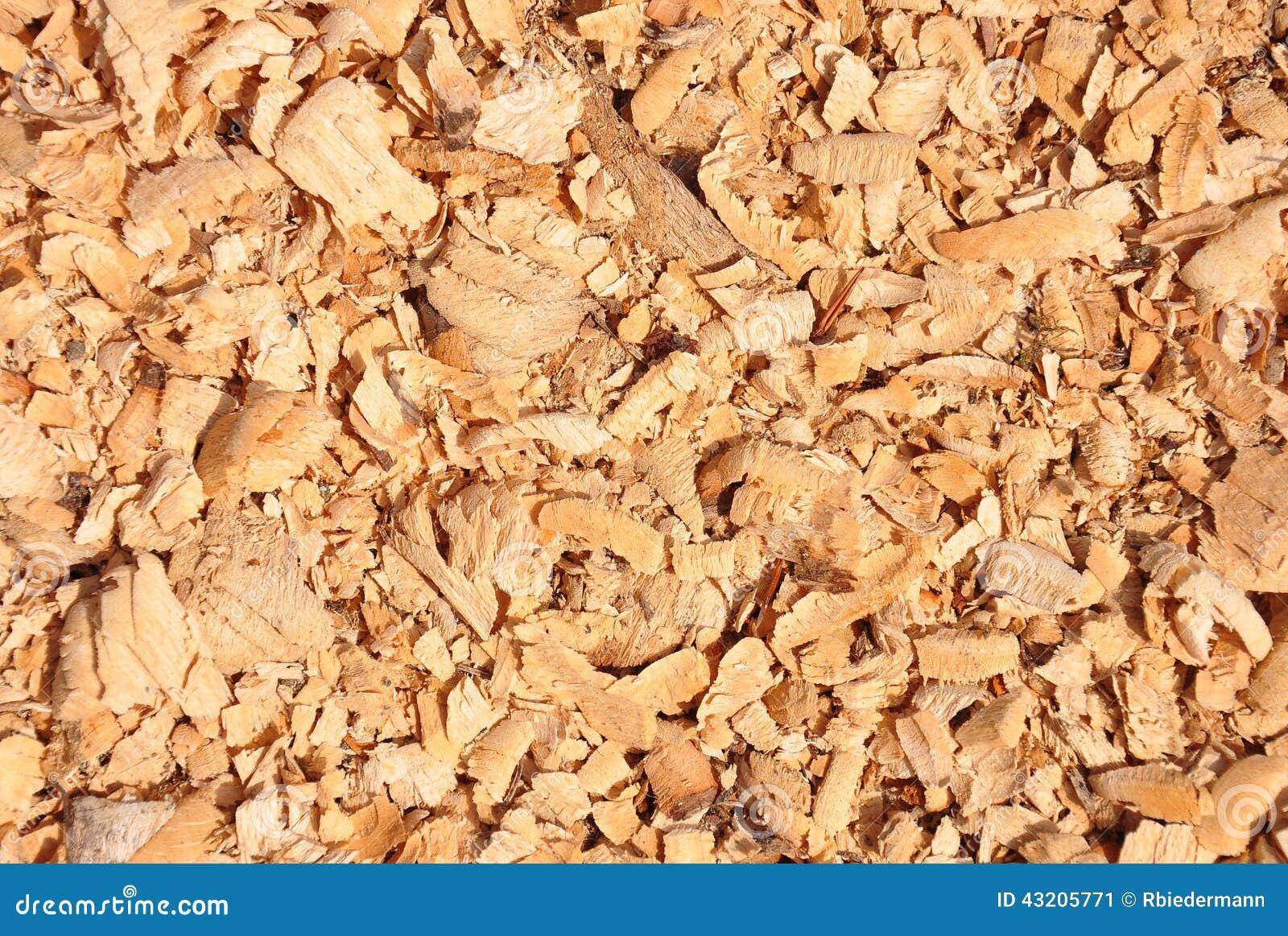 Beaver chips