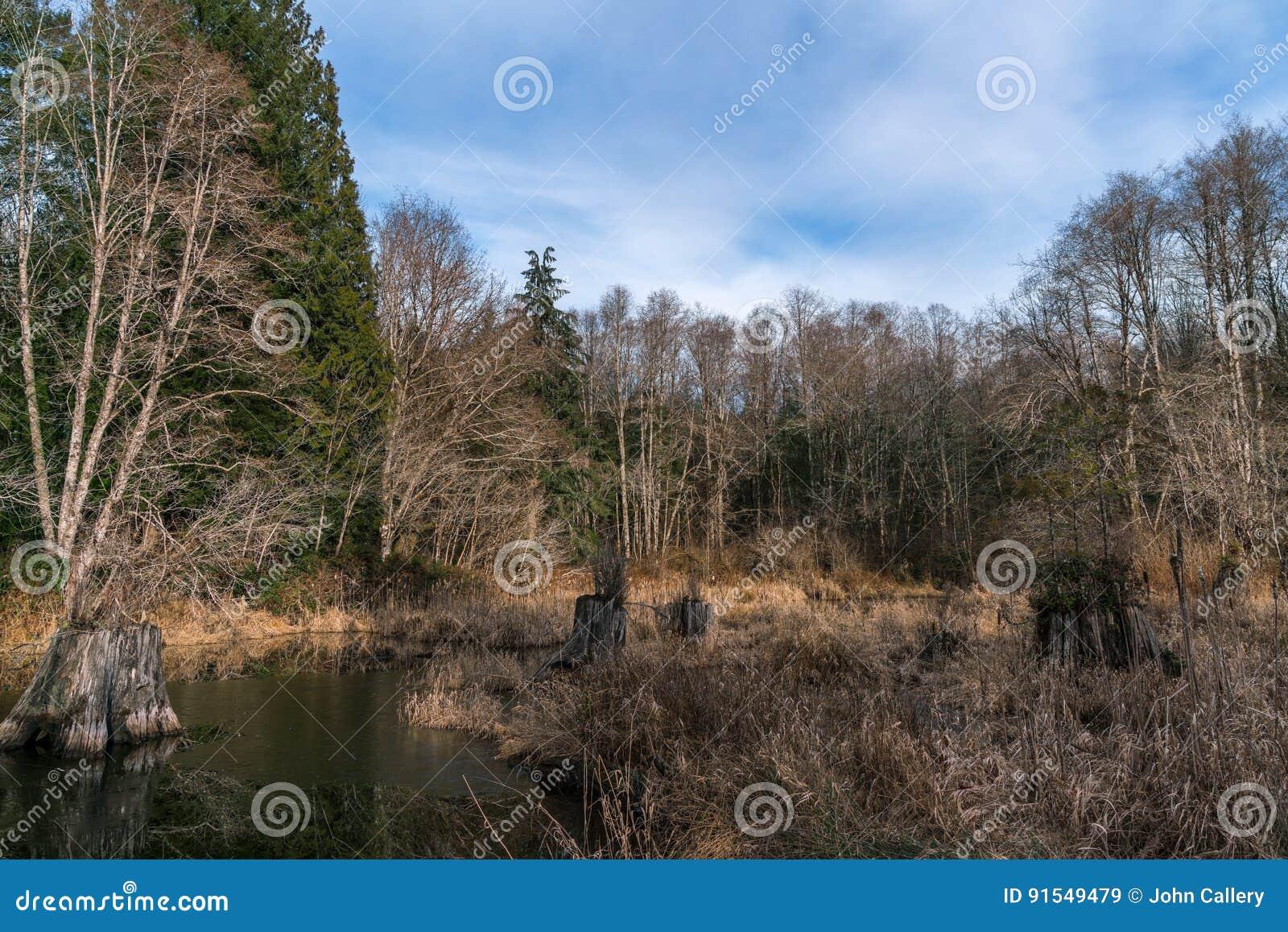 Bare beaver pics