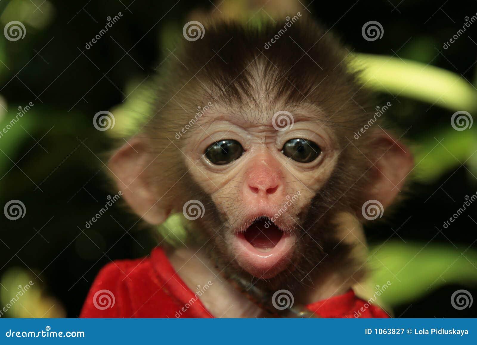 Bebé del mono