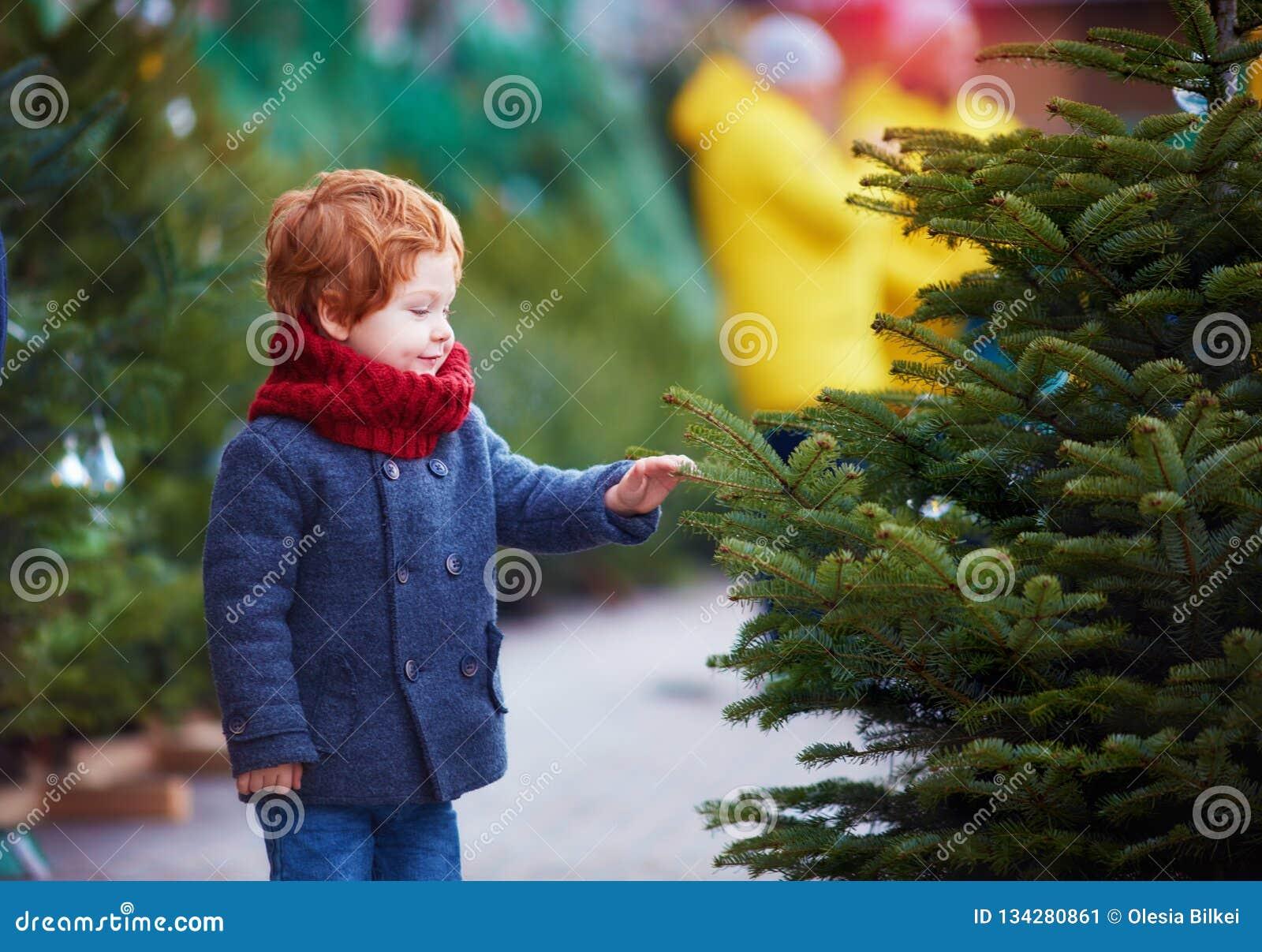 Bebé feliz lindo que elige el árbol de navidad por vacaciones de invierno en el mercado estacional