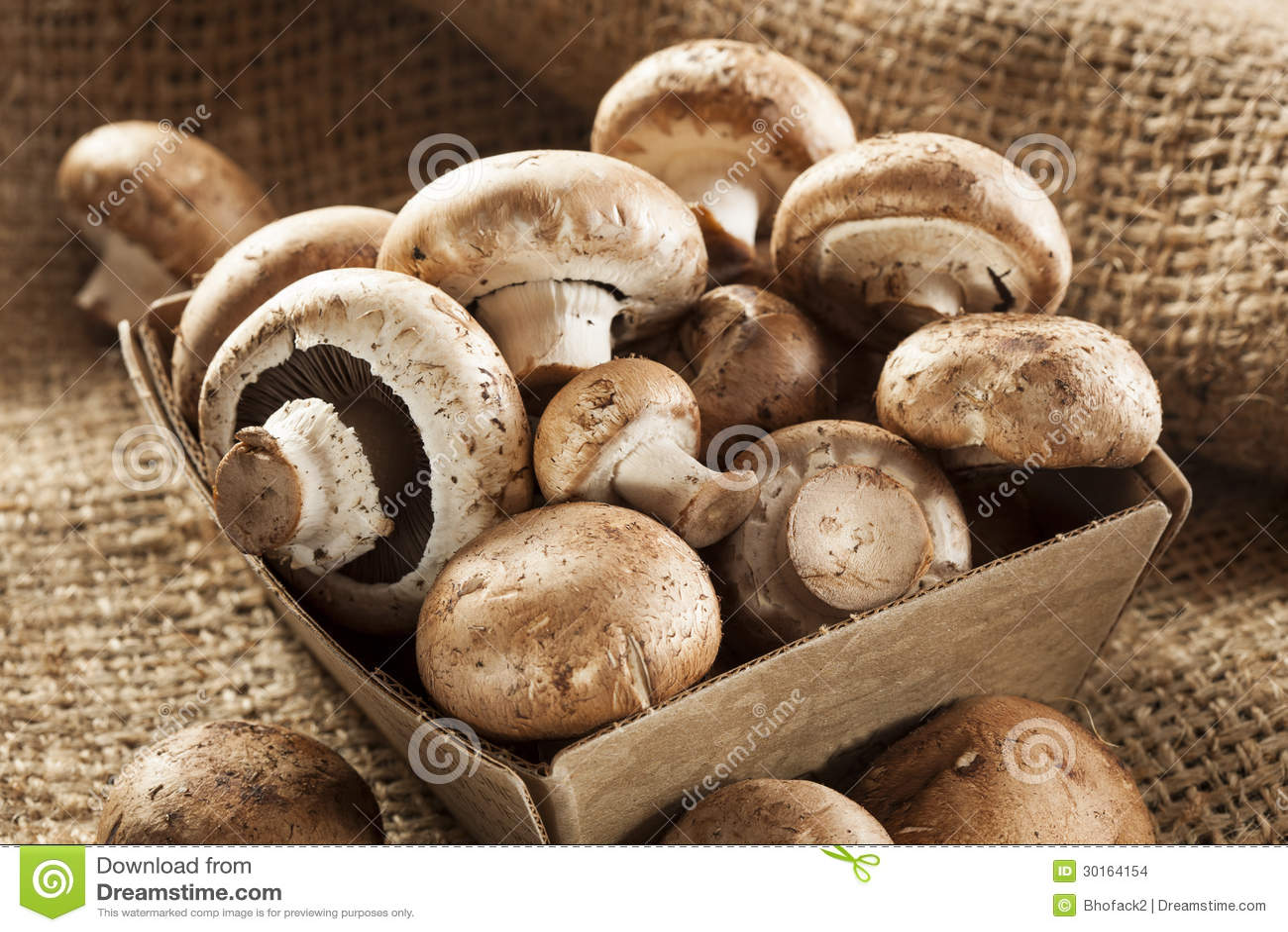 Bebê orgânico Bella Mushrooms de Brown