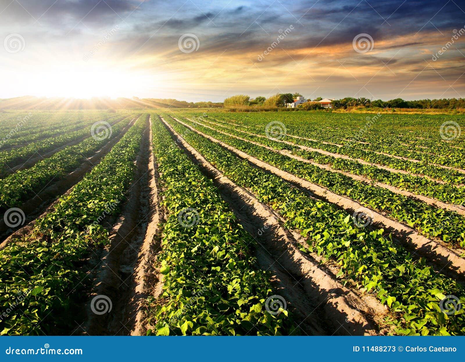 Bebautes Land
