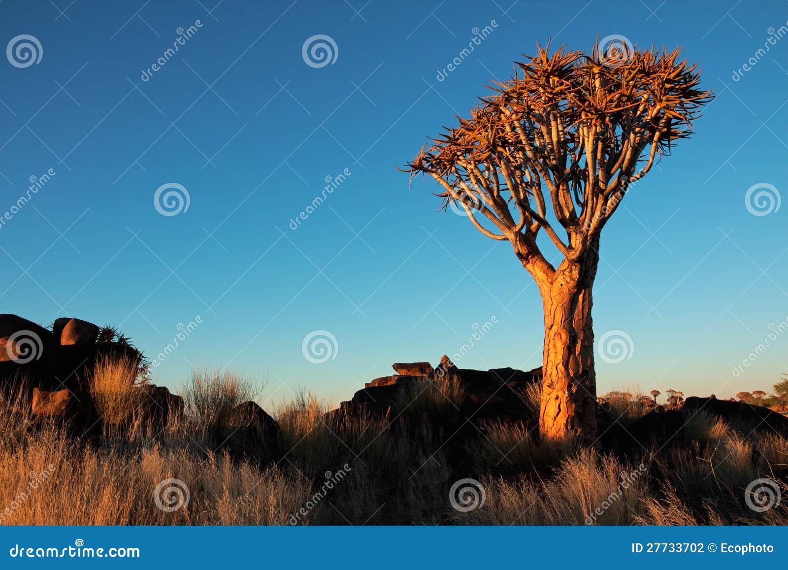 Bebenbaumlandschaft