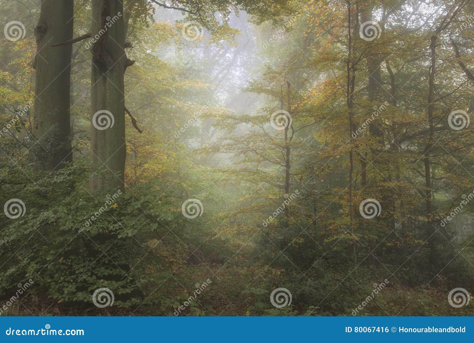 Bedöva färgrikt vibrerande stämningsmättat Autumn Fall dimmigt skogLAN