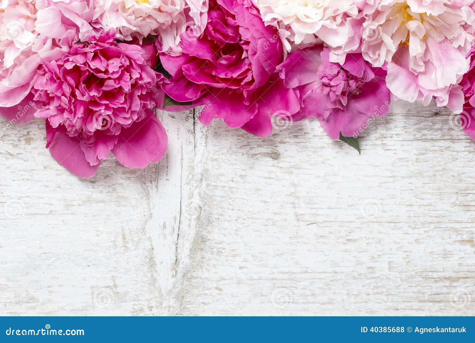 Bedöva rosa pioner på vit lantlig träbakgrund