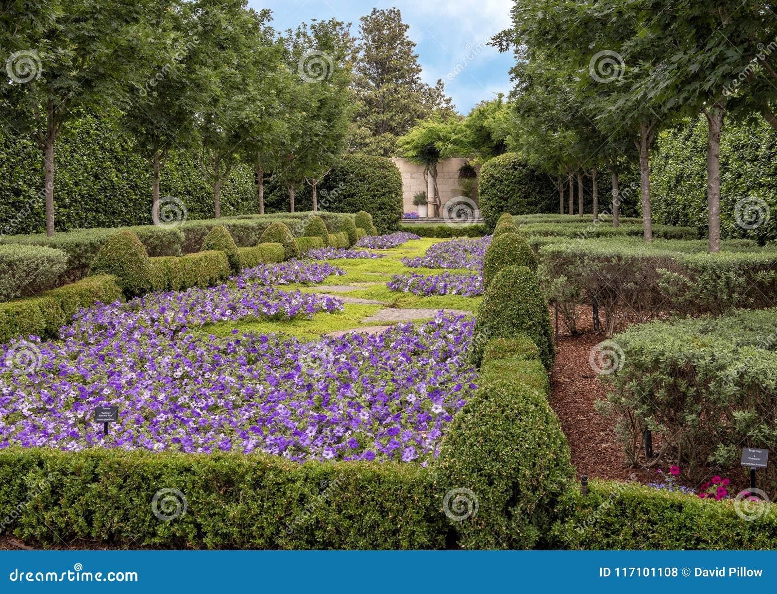 Bed Of Purple Petunias And Hedges Dallas Arboretum And Botanical