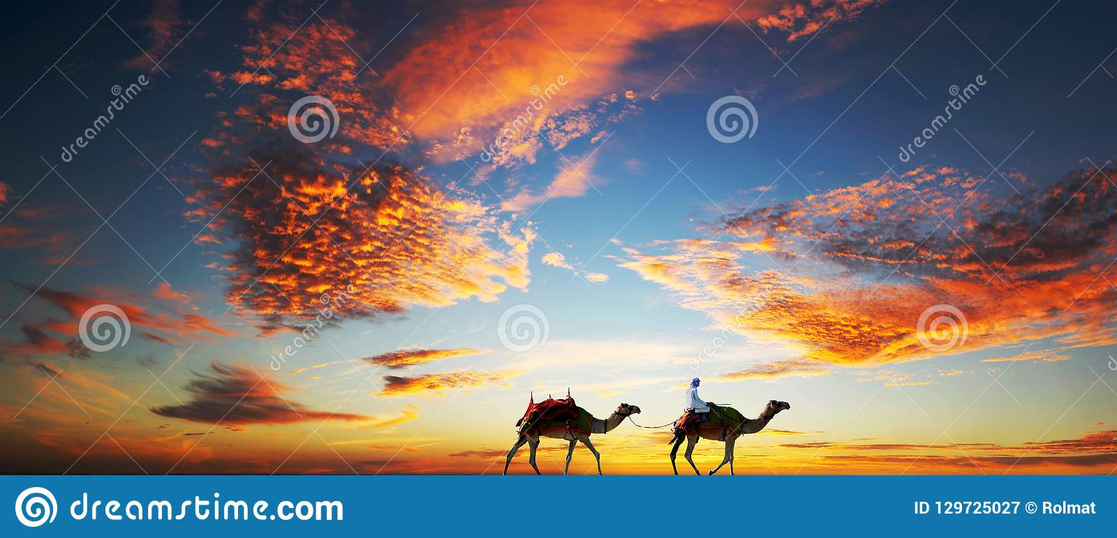Camels under a dramatic sky