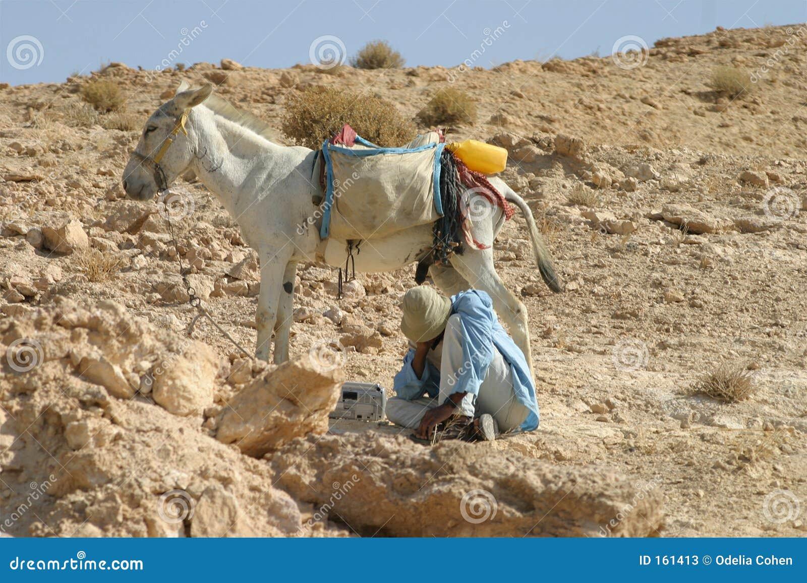 Bedouin herder & zijn ezel