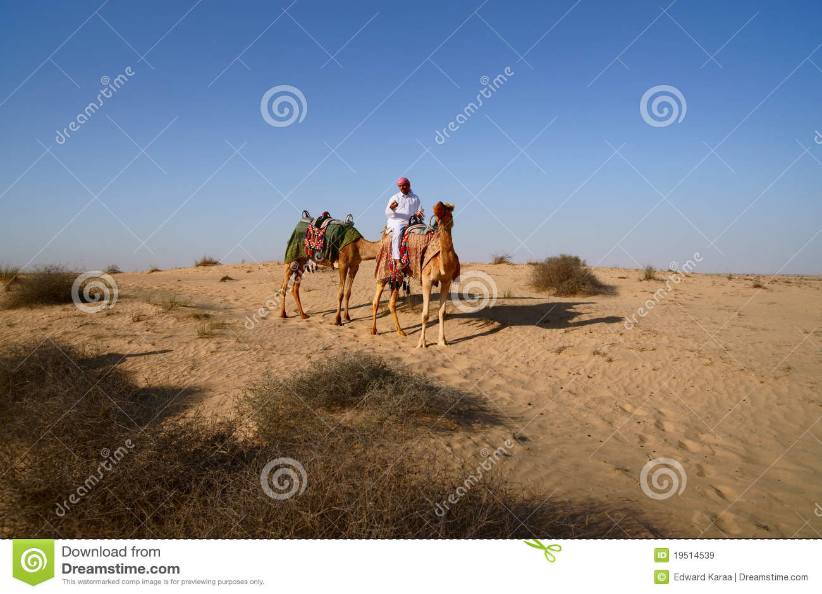 Bedouin sul cammello