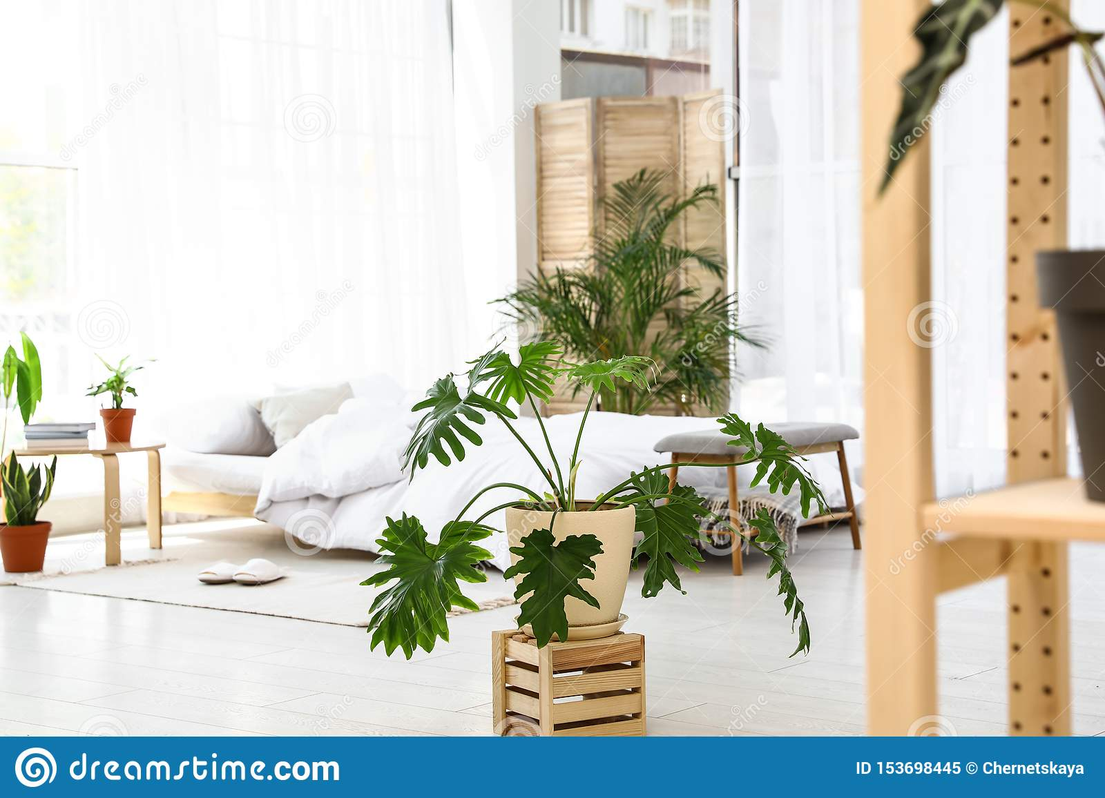943 Indoor Plants Bedroom Photos Free Royalty Free Stock Photos From Dreamstime