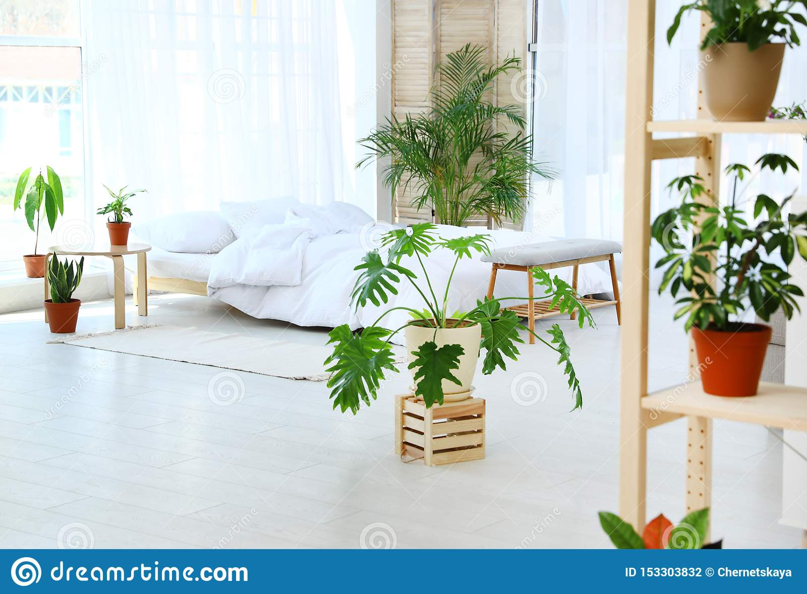 41 265 Indoor Plants Photos Free Royalty Free Stock Photos From Dreamstime