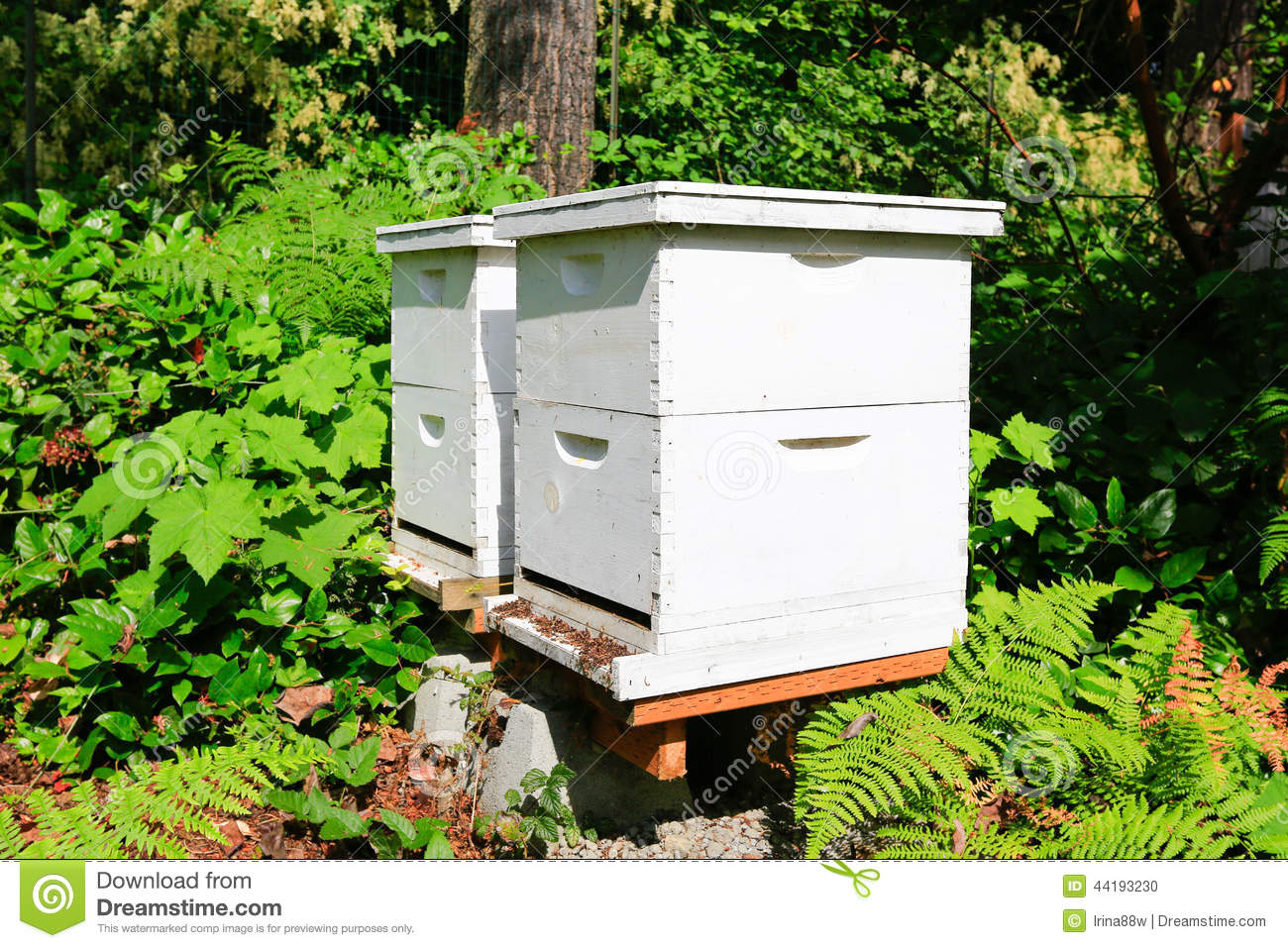 lovely backyard beekeepers architecture nice