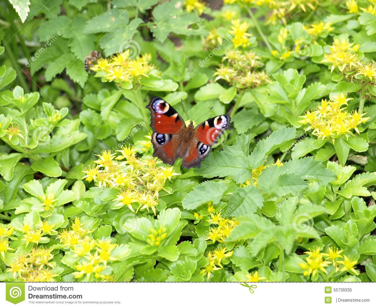 Bee And Butterfly On Flowers Stock Photo Image 55739335
