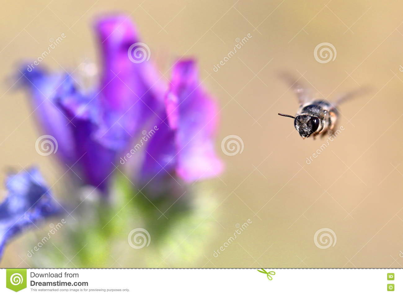 Bee caught in midair