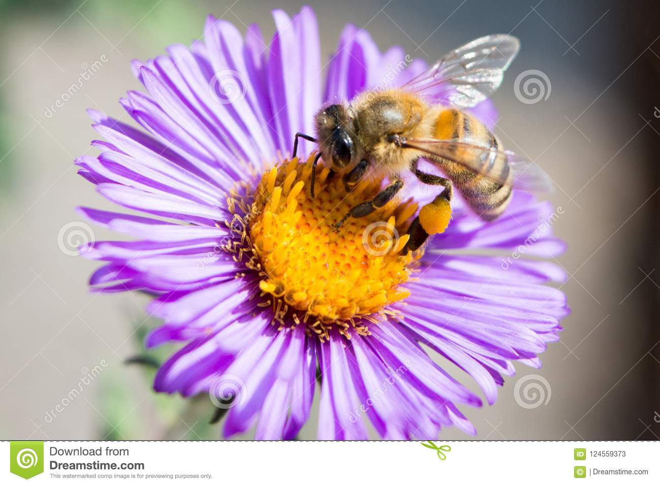 Bee on a flower close up