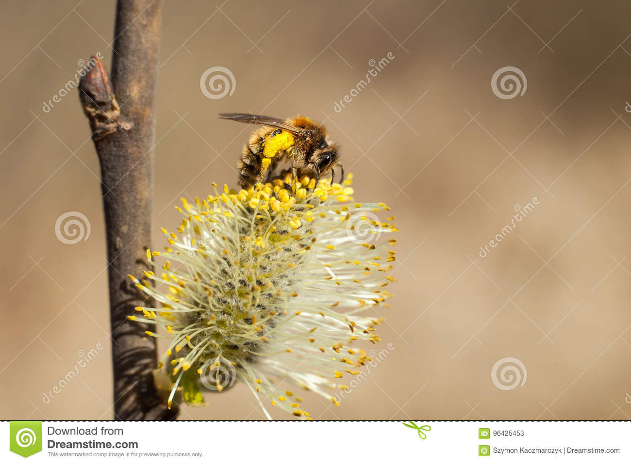 The bee collects pollen on the flowering tree.