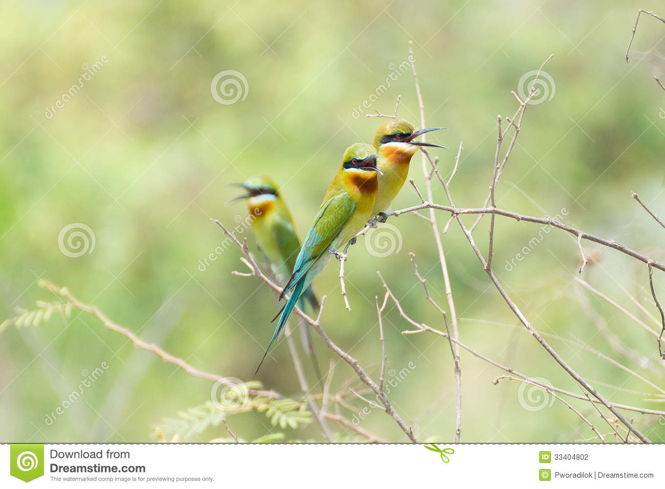 Bird And The Bee, The - One Too Many Hearts