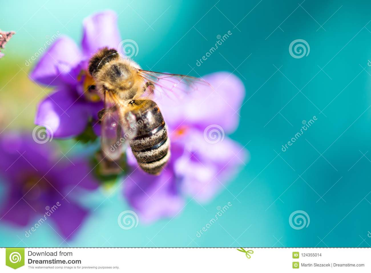 Bee on the flower. Small useful insect is working and making honey. Honeybee with wing on the blossom. Spring at countryside of me
