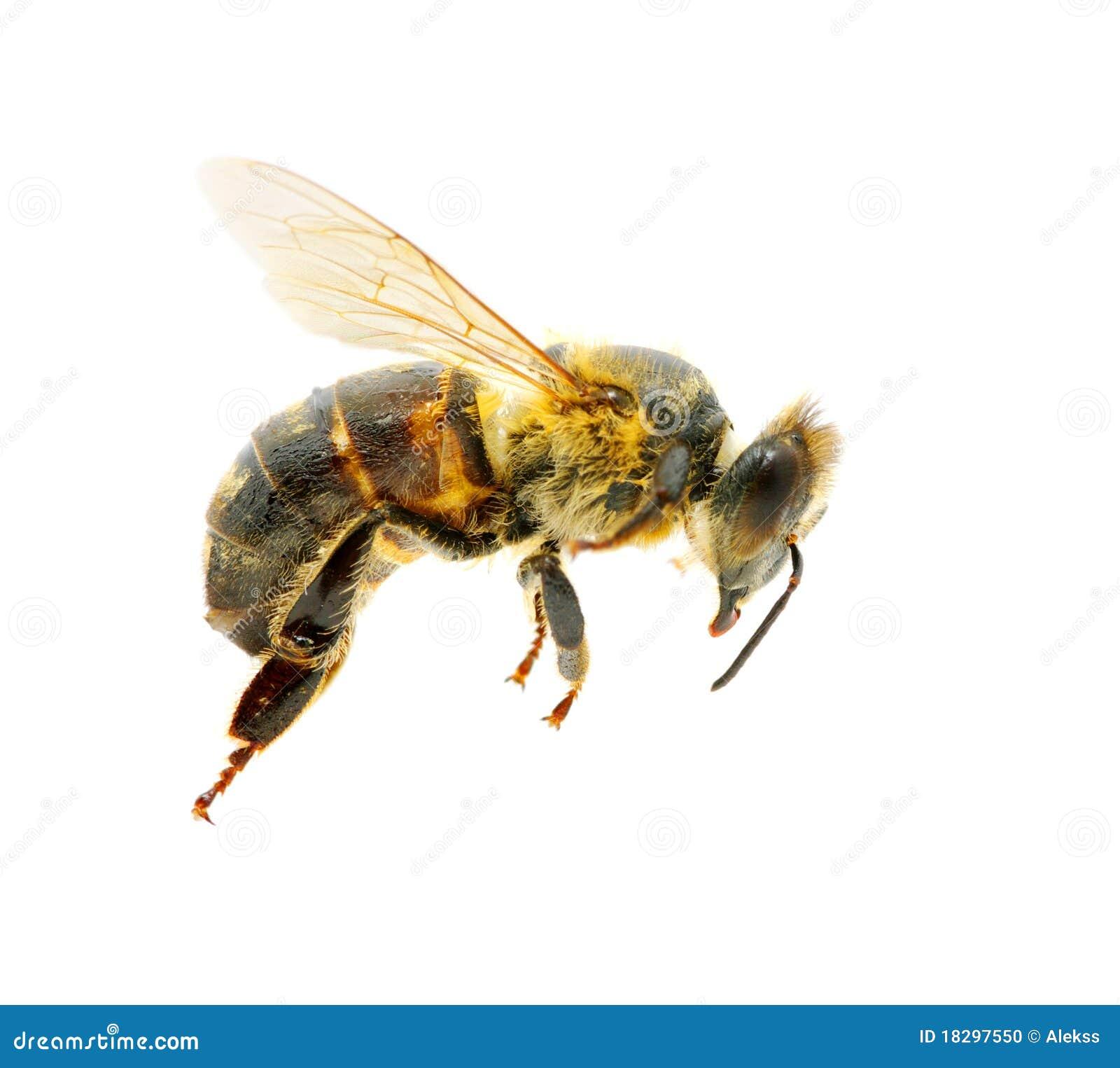 Bee in flying