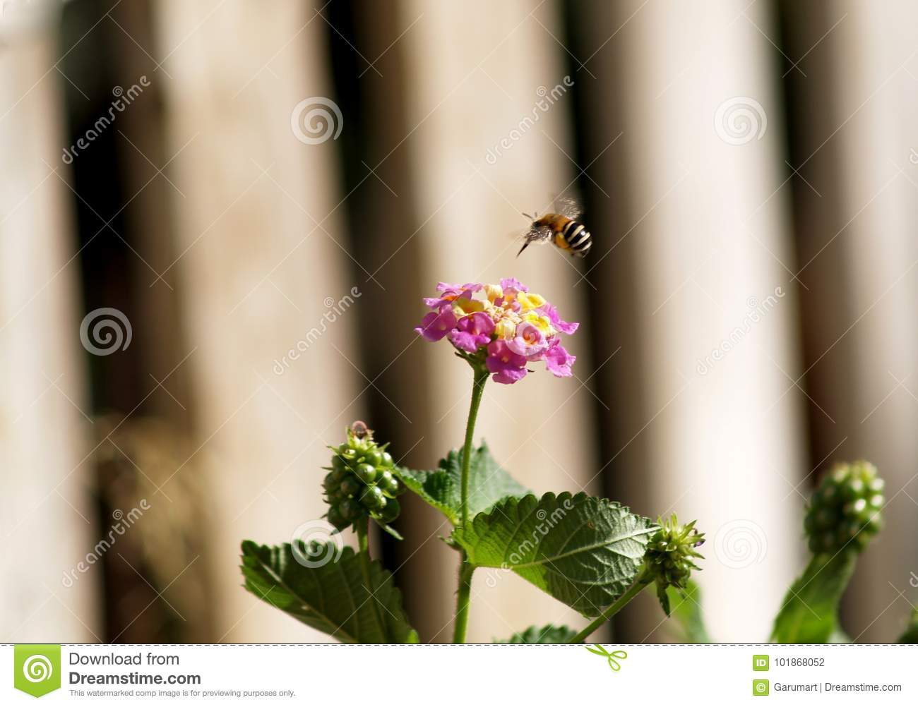 Bee flying over a flower