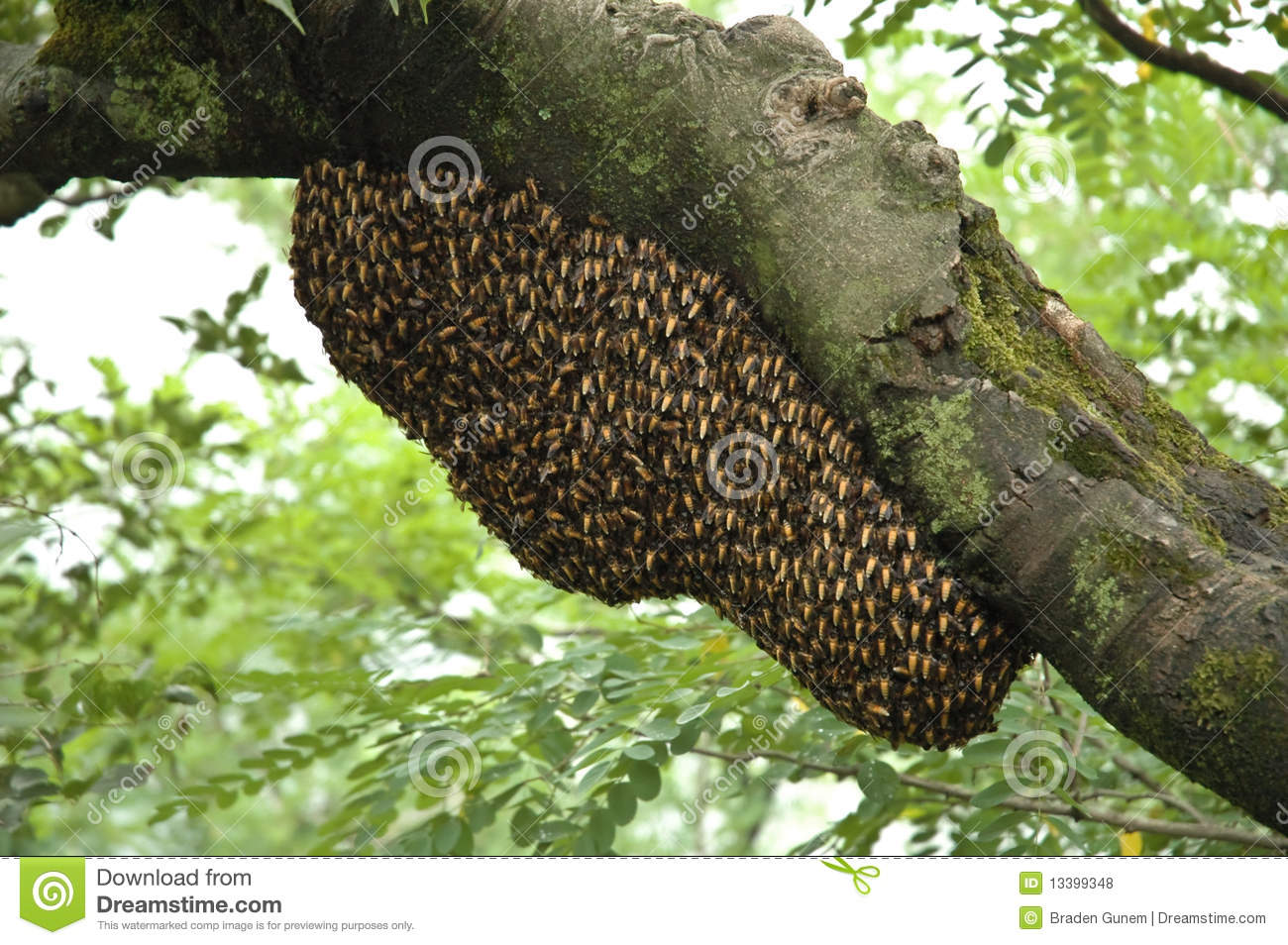 Royalty Free Stock Photos Bee Hive Image13399348 on Parts Of An Earthworm