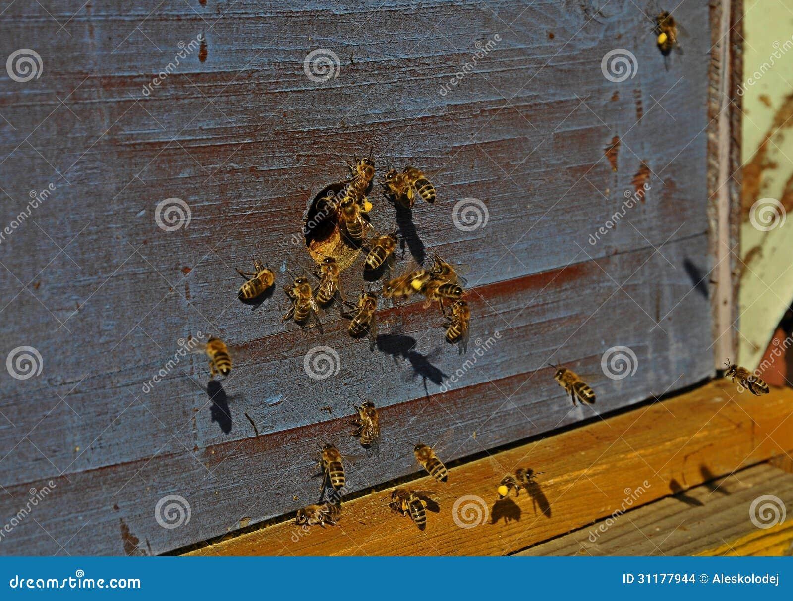 bee spring men Desktop wallpaper spring, peach, bee hd for pc & mac, laptop, tablet, mobile phone.