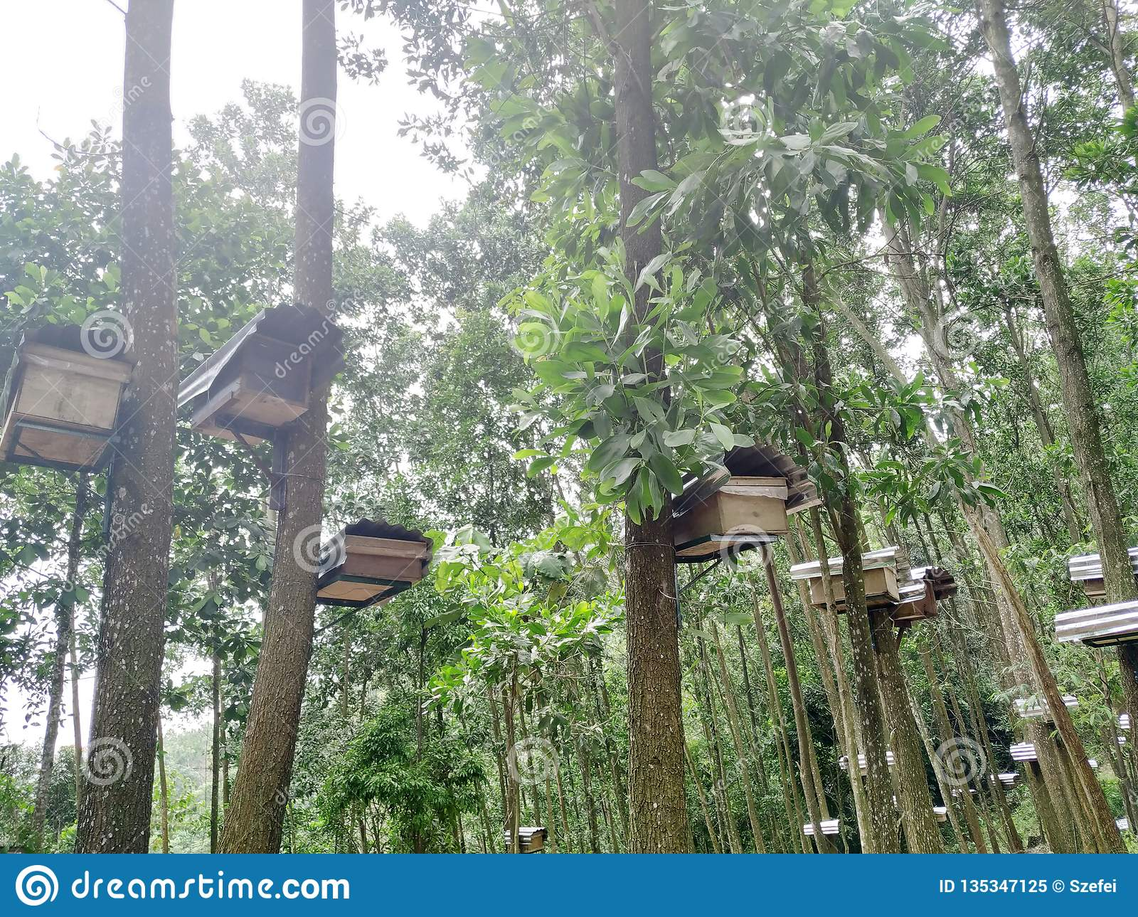 Bee hives in forest