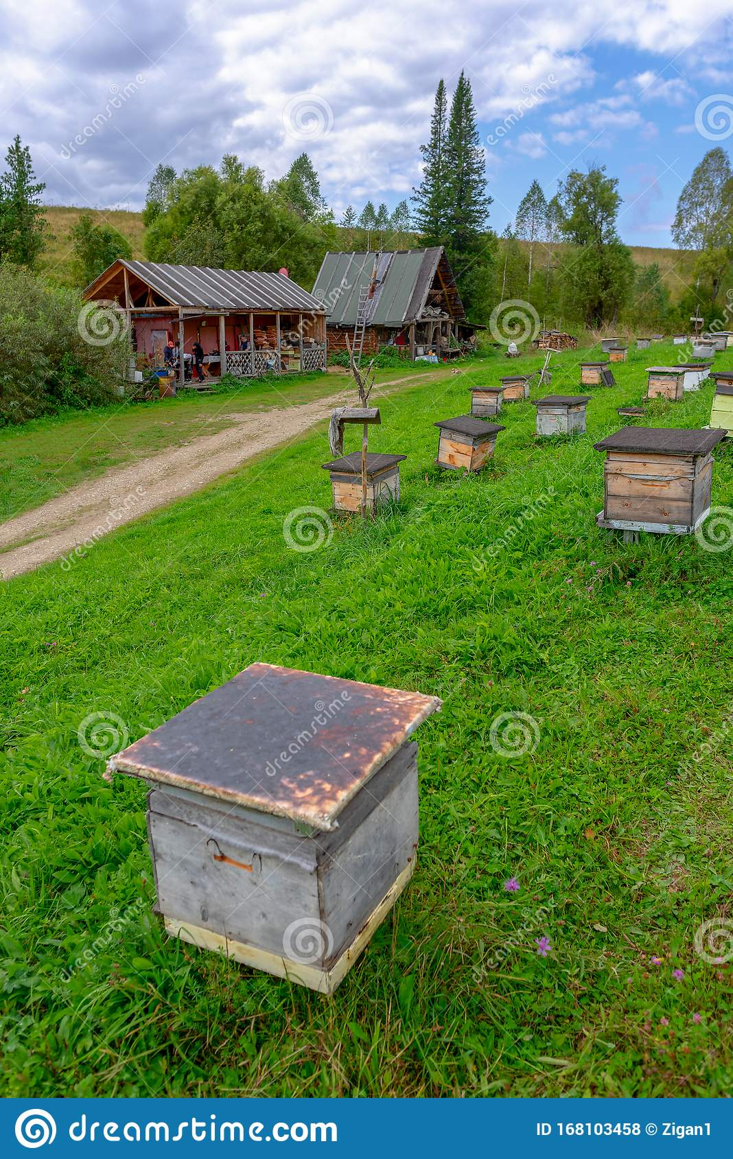 Hives on the apiary stock image. Image of agriculture